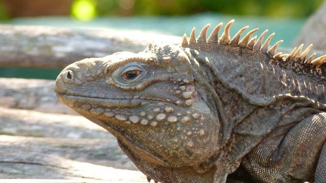 lizard-1379074_1920